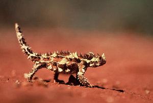 E_desert_biodiv_photo